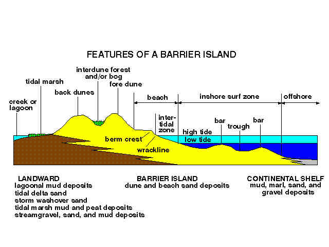 DYNAMICS OF BEACHES AND BARRIER ISLANDS